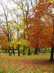 06-11-19_automne_04