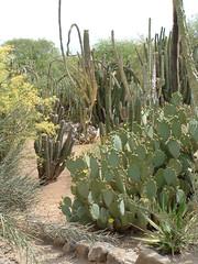 Desert Botanical Garden 17