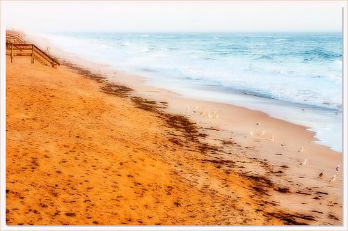 ocean sea seagulls seascape beach nature water birds landscape golden seaside interestingness sand waves florida gulls f10 explore flagler sapphire flaglerbeach interestingness120 i500 abigfave explore20dec06