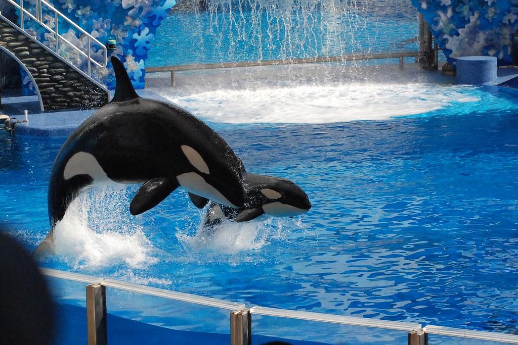 SeaWorld - Shamu Show