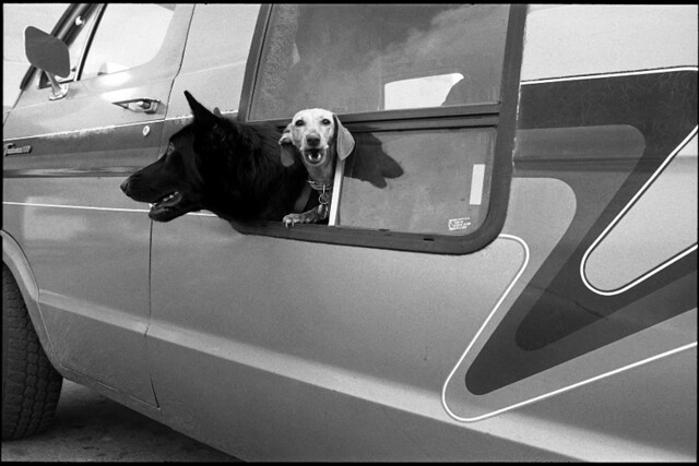 Van dogs - The Decisive Moment in Street Photography