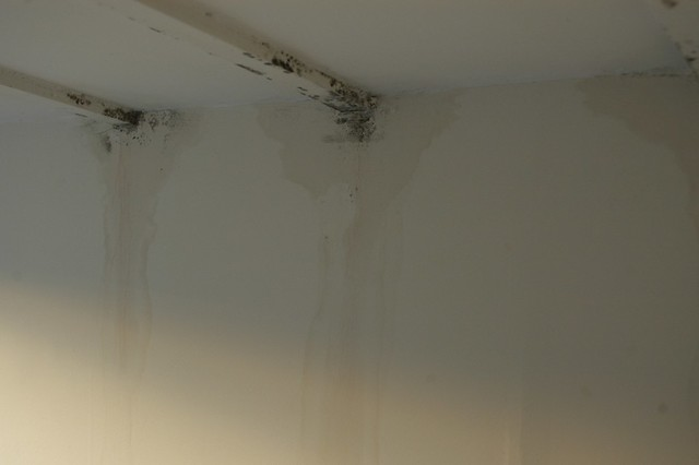 damp on my walls in my bedroom