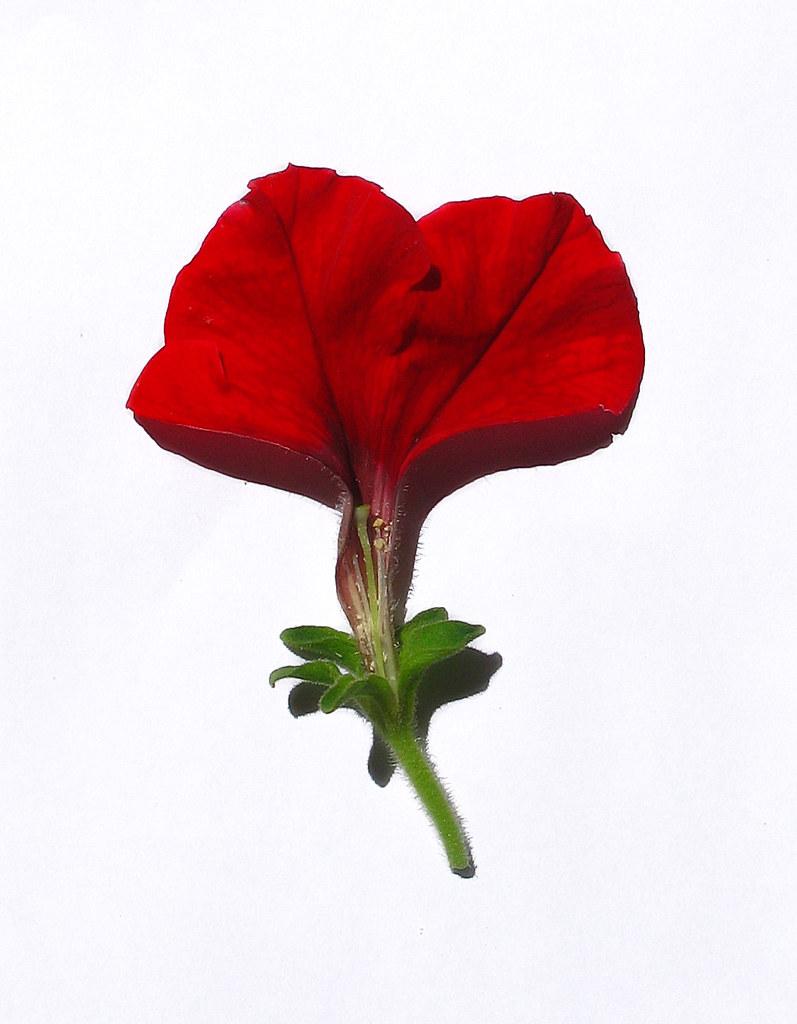 My Flowers 186