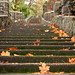Step into Fall by Gigapic