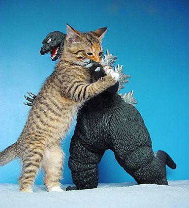 kitty vs. godzilla