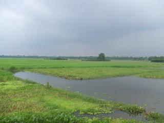 Bangladesh, marshes