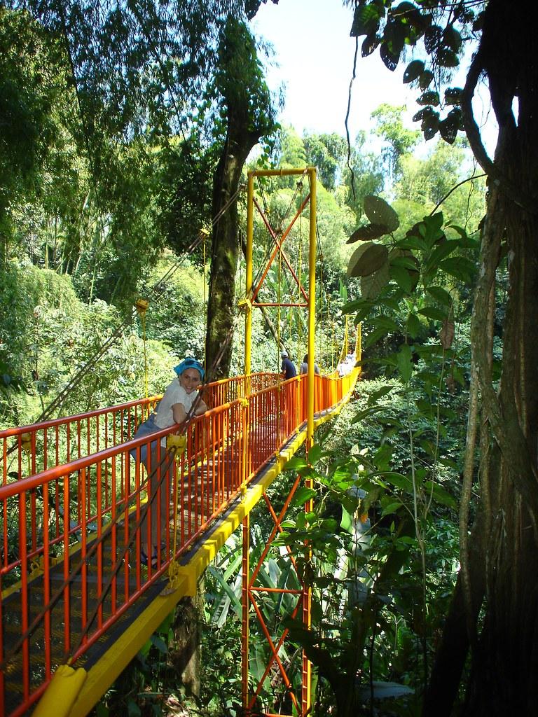 Imagen del Puente colgante en el Jardín Botánico del Quindío