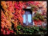 Ravello - Leaves and door