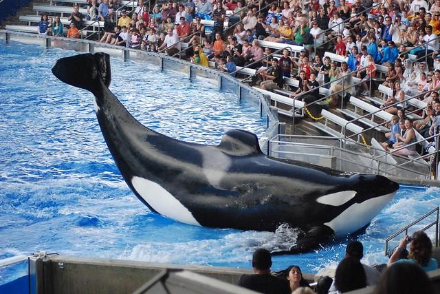 Orlando >> SeaWorld - Shamu Show | Flickr - Photo Sharing!