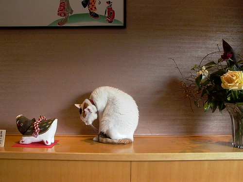 a Japanese cat in a restaurant by kaoruokumura