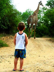 Boy with Camelopardalis Giraffa