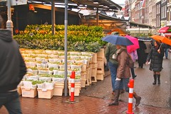 Ethan kicks it at the Amsterdam Tulip market
