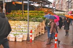 A rainy February weekend in Amsterdam.