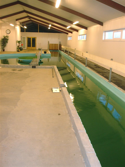 Horse Swimming Pool Flickr Photo Sharing
