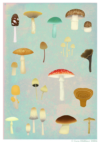 Leo Hillier: Mushrooms