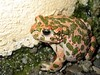 True Toads - Photo (c) Stavros Markopoulos, some rights reserved (CC BY-NC-ND)