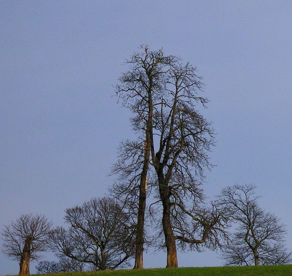 Book 1, Walk 19, Hever to Leigh 4 Trees above Penshurst, 14 Jan '07.
