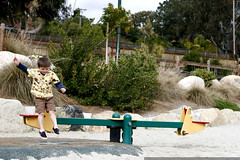 seesaw diving    MG 0268