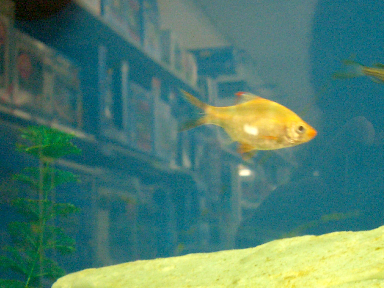 image gallery petco fish