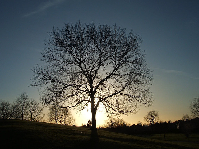 The Dreaming Tree /two, Fujifilm FinePix F455