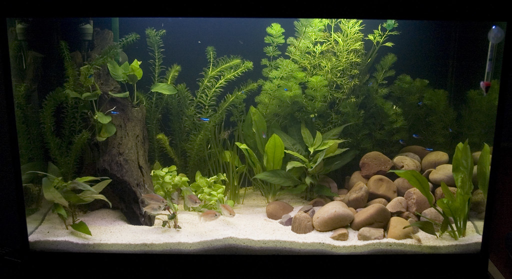 Guppy aquarium guppy aquarium setup 2017 fish tank for Freshwater fish tank setup