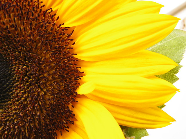 Sunflower, Panasonic DMC-F7