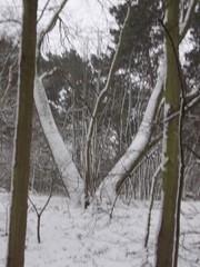 Sneeuw in Scheveningen (4)