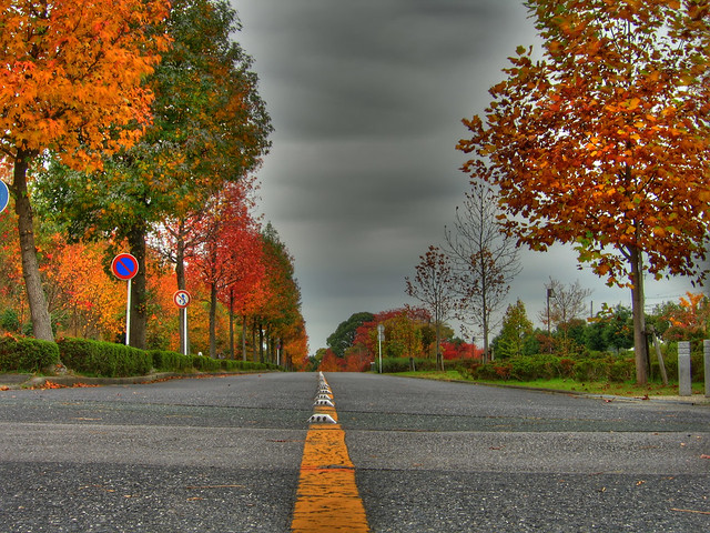 Photo:Vanishing autumn (HDR) By EugeniusD80
