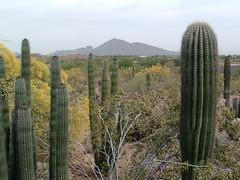 Desert Botanical Garden 14