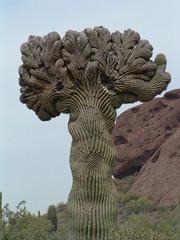 Desert Botanical Garden 18
