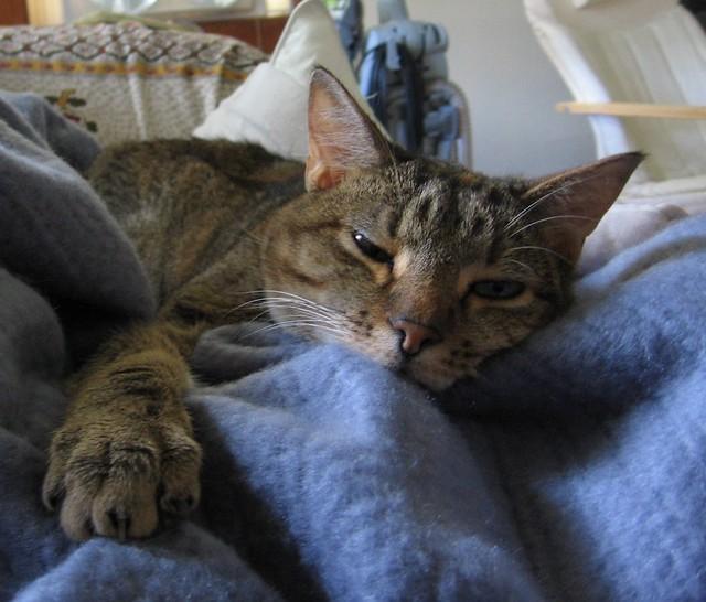 Cat Jetty Cat Names San Diego
