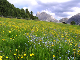 Mountain meadow - memory of  the summer colors!
