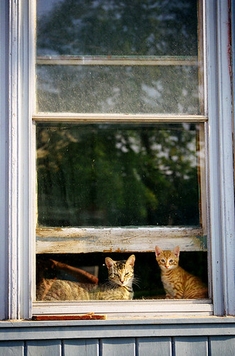 Window Cats