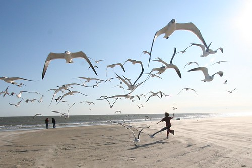 running with the seagulls | by eschipul