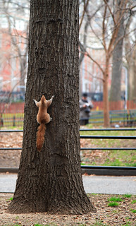 When Squirrels have Anxiety Attacks!
