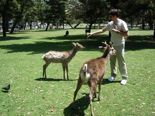 Viaje a Kansai – Día 6 primera parte – Nara class=