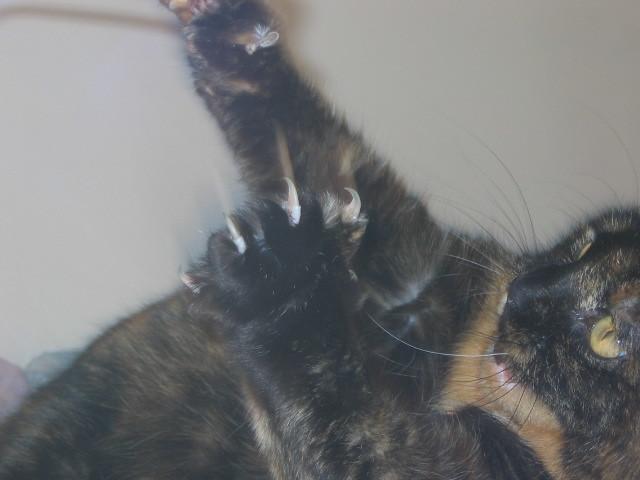 Ben claws