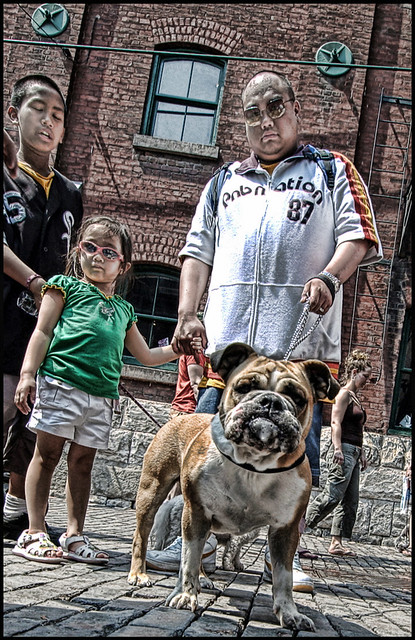Toronto Dog/People Gathering