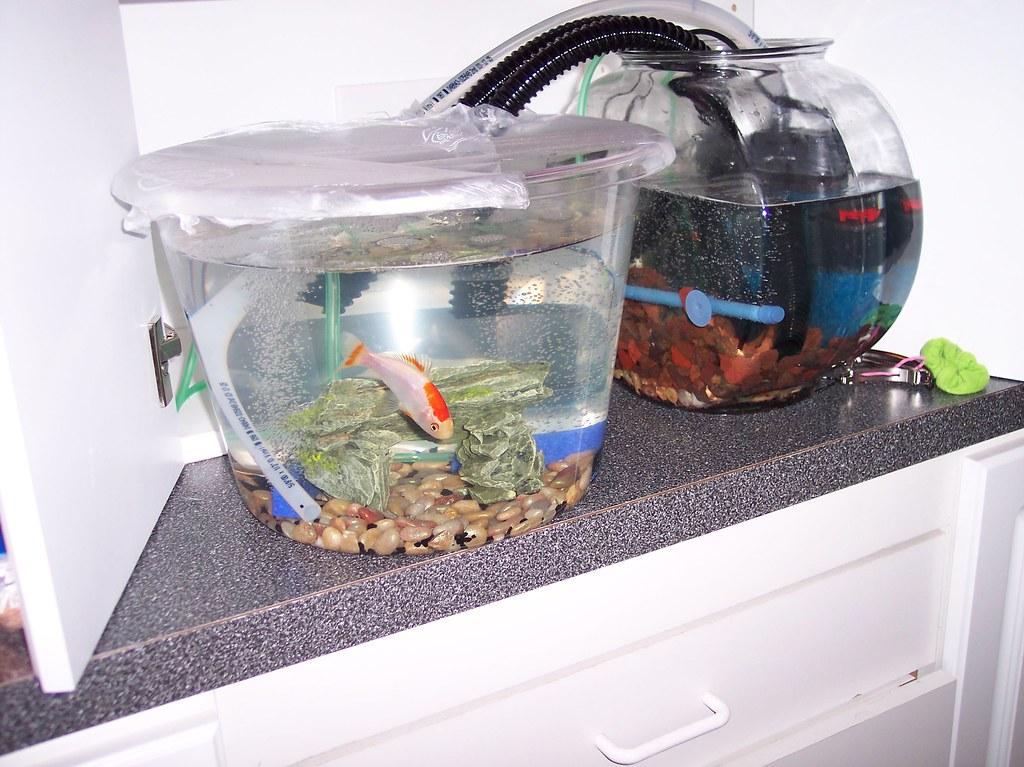 Set up fish tank filter fish tank filter bandpass for How to set up a fish tank filter