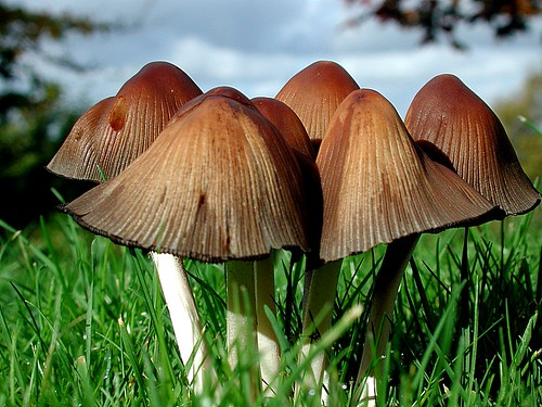 fairy toadstools in the green garden