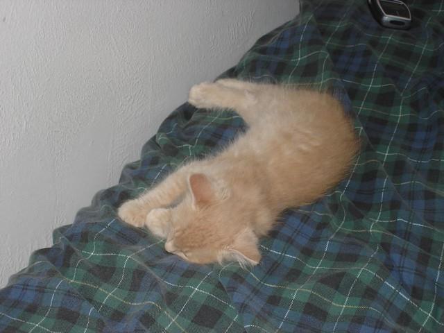 A kitty named Milo