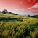 Redsky by Serrano77  BIG Papa......