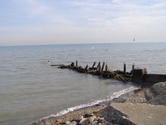 Sea Gulls rock.