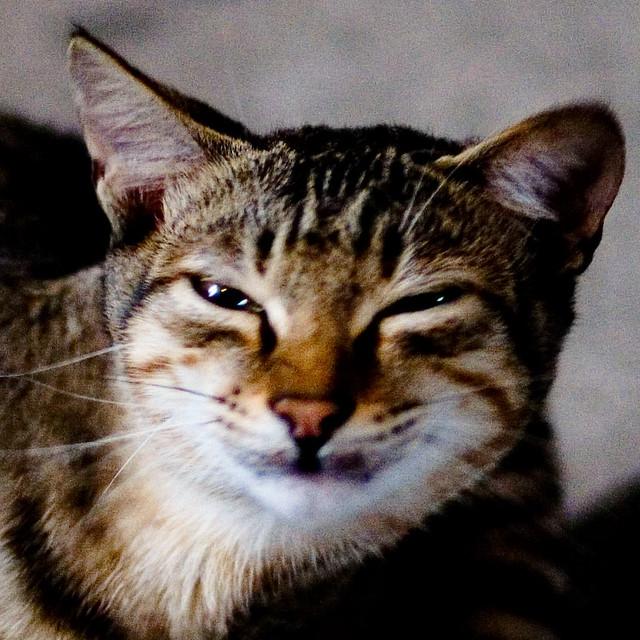 猫脸老太太图片_猫脸老太婆诈尸_猫脸纹身图案大全_铁血战士猫脸