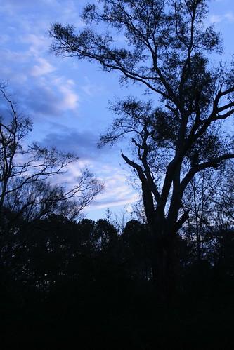 blue tree nature catchycolors landscape ilovenature louisiana mrgreenjeans gaylon clintonla gaylonkeeling