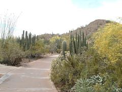 Desert Botanical Garden 12