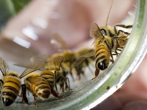 _mg_1368-bees