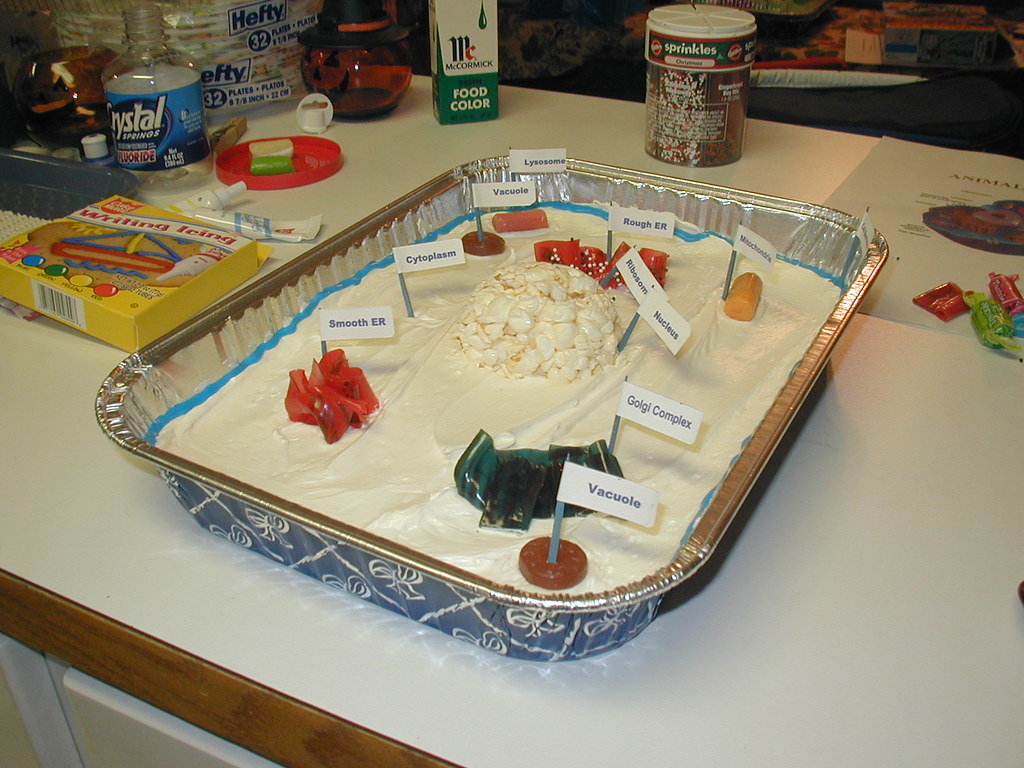 Basic Plant Cell Diagram Cake Unlabeled Wire 7th Grade Images Pictures Becuo Project 37