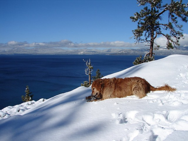 Image Result For Sandy Paws Dog