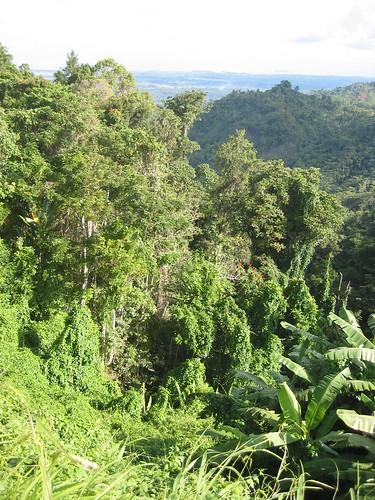 new rain forest guinea png papuanewguinea papua madang nobnob kahunapulej kahunapule